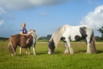 paarden-highres